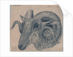 Study of the head of a ram by Edward William Cooke