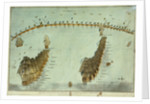 Plan of the attack by Lord Nelson, on the combined fleet, 21 October 1805 by Robert Dodd