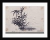 Group of trees.... Java. 1. Cocoa Tree, 2. Palm Tree, 3. Plantain by C. W. Browne