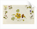 Designs with nasturtiums and other flowers by Rosa Brett