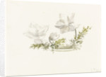 Study of a flower arrangement by Margaret Louisa Herschel