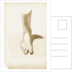 Study of a foot and ankle by Margaret Louisa Herschel