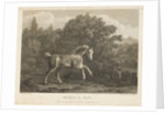 Horse at Play by George Stubbs