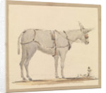 Study of a donkey with a bridle and harness by Robert Streatfeild