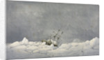 The Perilous situation of HMS 'Investigator', while wintering in the pack in 1850-1851 by S. Gurney Cresswell