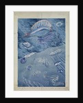 Some of blue and transparent animals at or near the surface of a tropical ocean by Sir Alister Hardy