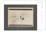 Catching a seal in the pack-ice from National Antarctic Expedition photo album by Sir Ernest Henry Shackleton
