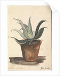 A Flower pot with a cactus growing in it inscribed, 'from nature' by Edward William Cooke