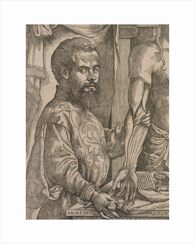 Andreas Vesalius dissecting the muscles of the forearm of a cadaver, 1543. by Steven van Calcar