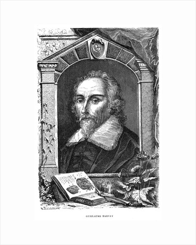 William Harvey (1578-1657) English physician, c17th century by Unknown