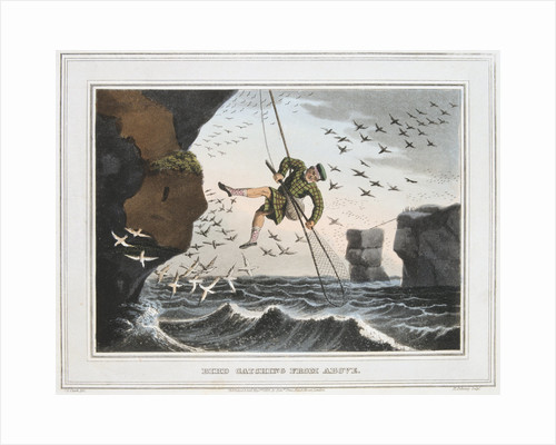 Bird Catching from Above, Shetland Islands, 1813 by Unknown