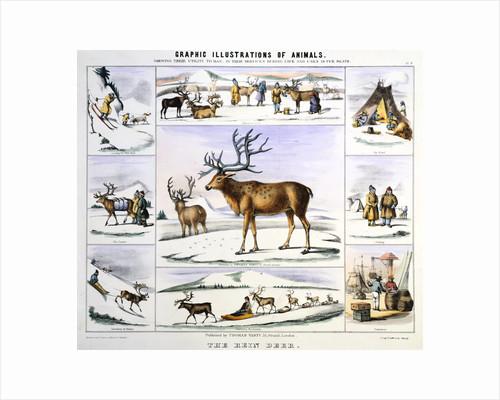 The Rein Deer, c1850 by Benjamin Waterhouse Hawkins