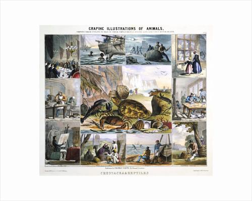 Crustacea and Reptiles, c1850 by Robert Kent Thomas