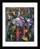 Gloxinias and Fuschias by John Duncan Fergusson