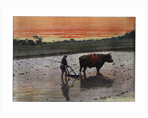 Preparation of a Rice Plantation in Japan by Charles Gillot