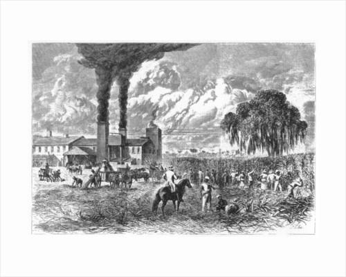 Sugar Plantation, New Orleans by A R Ward