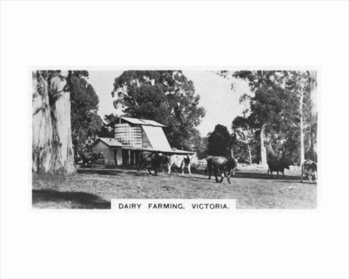 Dairy farming, Victoria, Australia by Anonymous