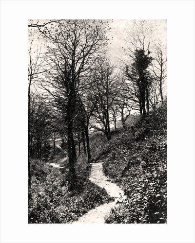 Lovers Lane, Fairlight, Hastings, Sussex by Anonymous