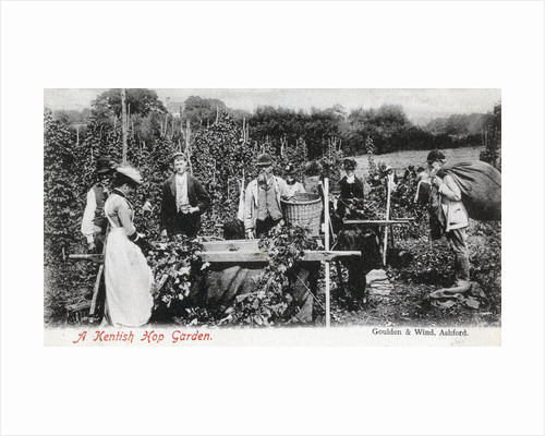 A Kentish hop garden by Goulden and Wind