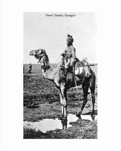Camel cavalry transport, India by Anonymous
