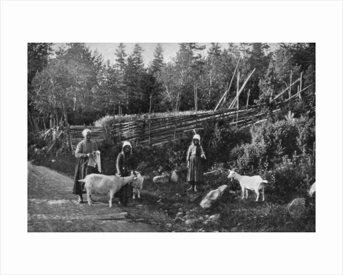 Goat farming in Dalarna, Sweden by Wald Zachrisson