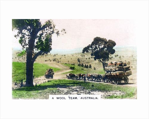A wool team, Australia by Cavenders Ltd