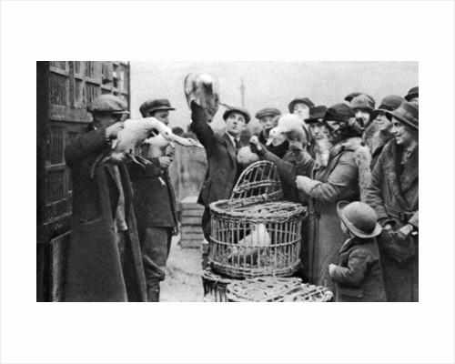 Poultry merchants, Caledonian Market, London by Anonymous
