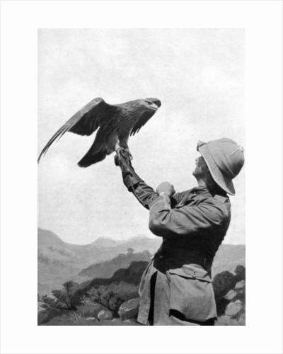 A British officer with a tamed golden eagle, Salonika, Greece, First World War by Anonymous