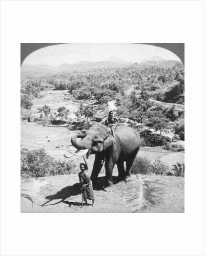 An elephant and its keeper, Sri Lanka by Underwood & Underwood