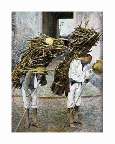 Two men carrying bundles of wood on their backs, Mexico by Anonymous