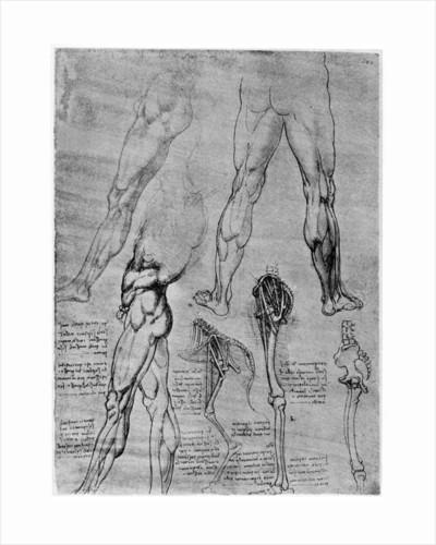 Studies in comparative anatomy by Leonardo Da Vinci