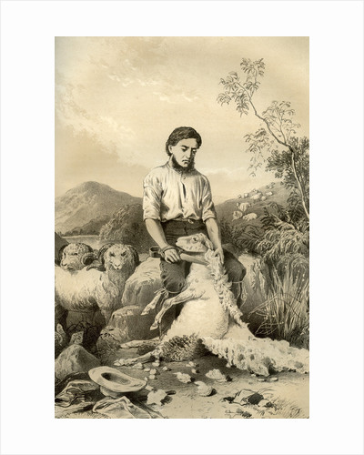 Sheep shearing by McFarlane and Erskine
