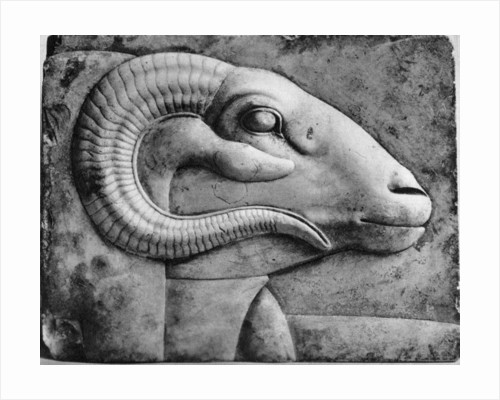 A ram's head, Egypt by Anonymous