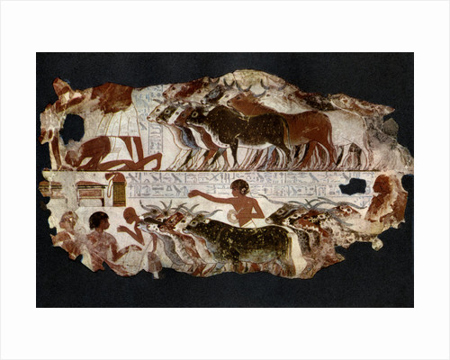 Herds of cattle from the time of the 18th Dynasty, Egypt, c1400 BC by Anonymous
