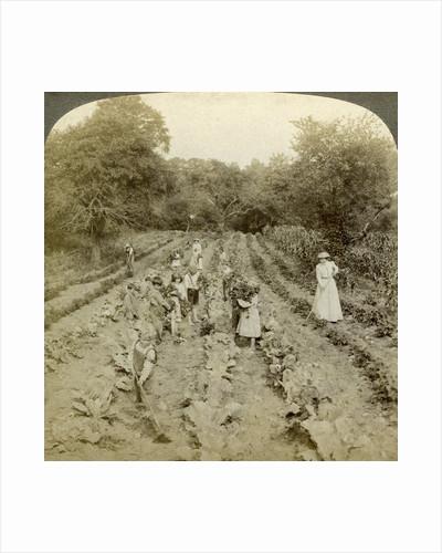 Children working in a vegetable garden, Salvation Army Home, Spring Valley, New York, USA by Underwood & Underwood