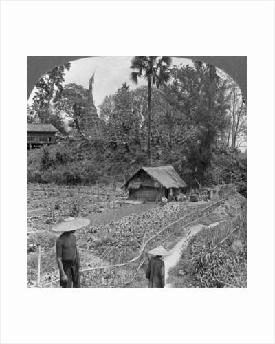 A vegetable garden amidst pagodas, Bhamo, Burma by Stereo Travel Co
