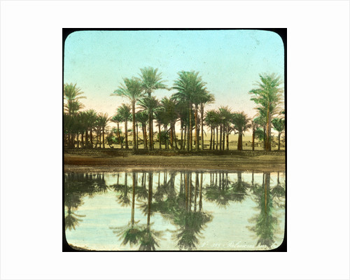 Palm trees reflected in water, India by Anonymous