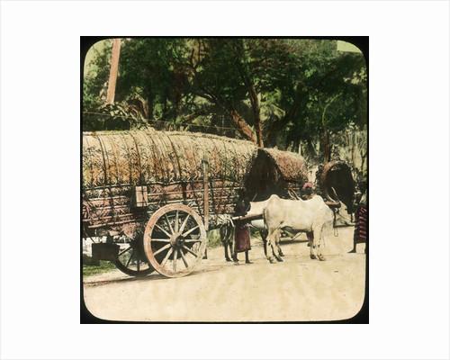 Native bullock cart, Ceylon by Anonymous