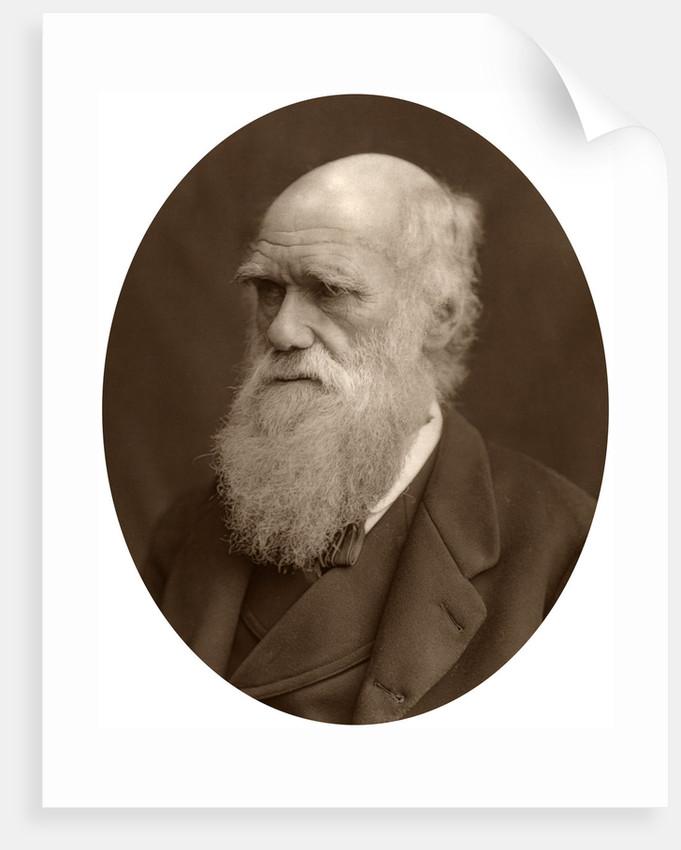 Charles Darwin by Lock & Whitfield