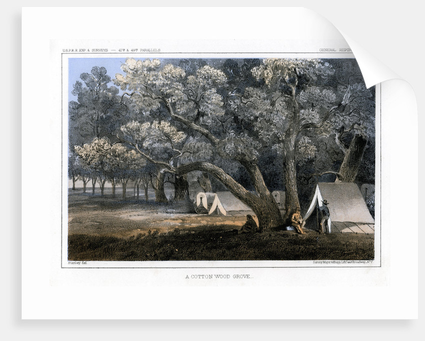 A Cotton Wood Grove by John Mix Stanley