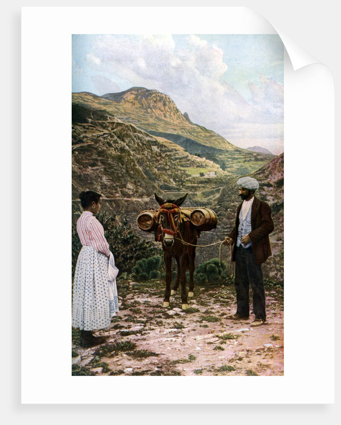 Mule with water kegs, Sicily, Italy by AW Cutler
