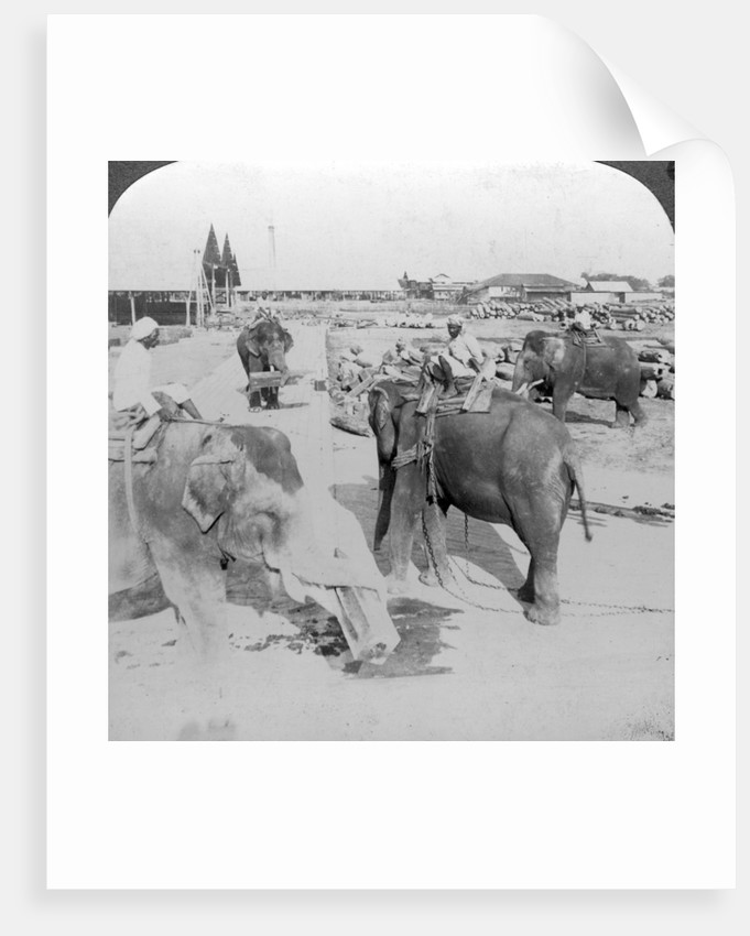 Elephants working in a timber yard, India by Underwood & Underwood