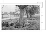 French machine gunners dug in at the edge of a road, under apple trees by Anonymous