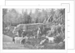 Goat farming in Dalarna, Sweden by Wald Zachrisson