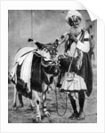Hindu cow with sacred cow, India by Anonymous