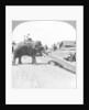Elephants moving timber, Rangoon, Burma (Myanmar) by Underwood & Underwood