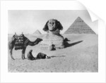 Praying before a sphinx, Cairo, Egypt by Anonymous