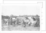Ox carts, Cochin China, Vietnam by Anonymous