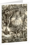Tasmanian forest scene by McFarlane and Erskine