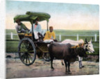 A Bombay reckla, India by Anonymous